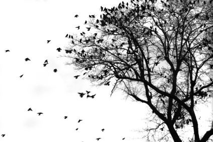 Montanaso Lombardo – Distrutte le serre del centro di ricerca CREA